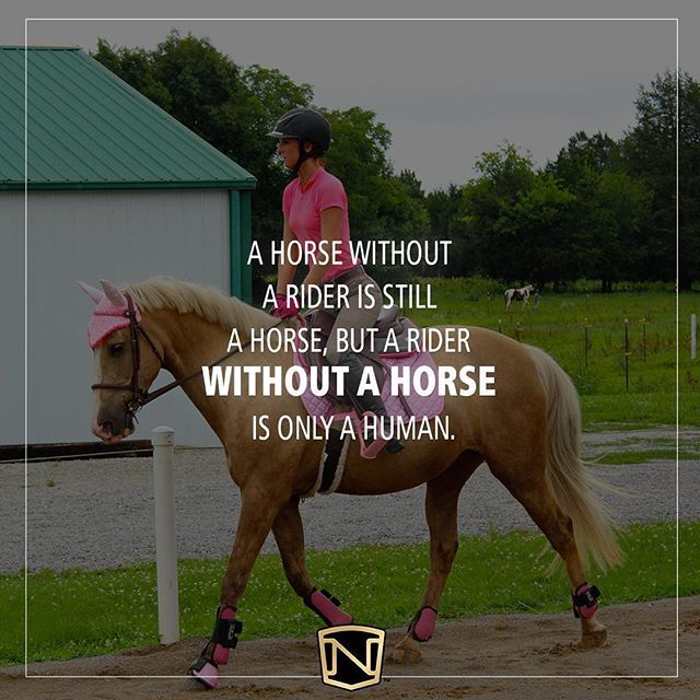 Quiz: What Breed of Horse are You? | Noble Life