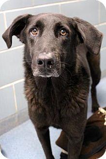 Union Grove, WI - Labradoodle Mix. Meet Jack, a dog for adoption. http://www.adoptapet.com/pet/16971657-union-grove-wisconsin-labradoodle-mix