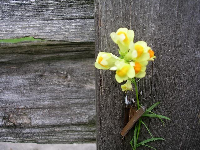 Ye Olde Fence by lynn_in_ontario, via Flickr
