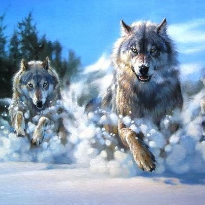 Wolves running through Snow…Gorgeous!