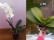 Jste unavení nebo rozzlobení a máte doma orchideje? Zahrádkáři říkají, že přinášejí negativní energii a měli by jste udělat…