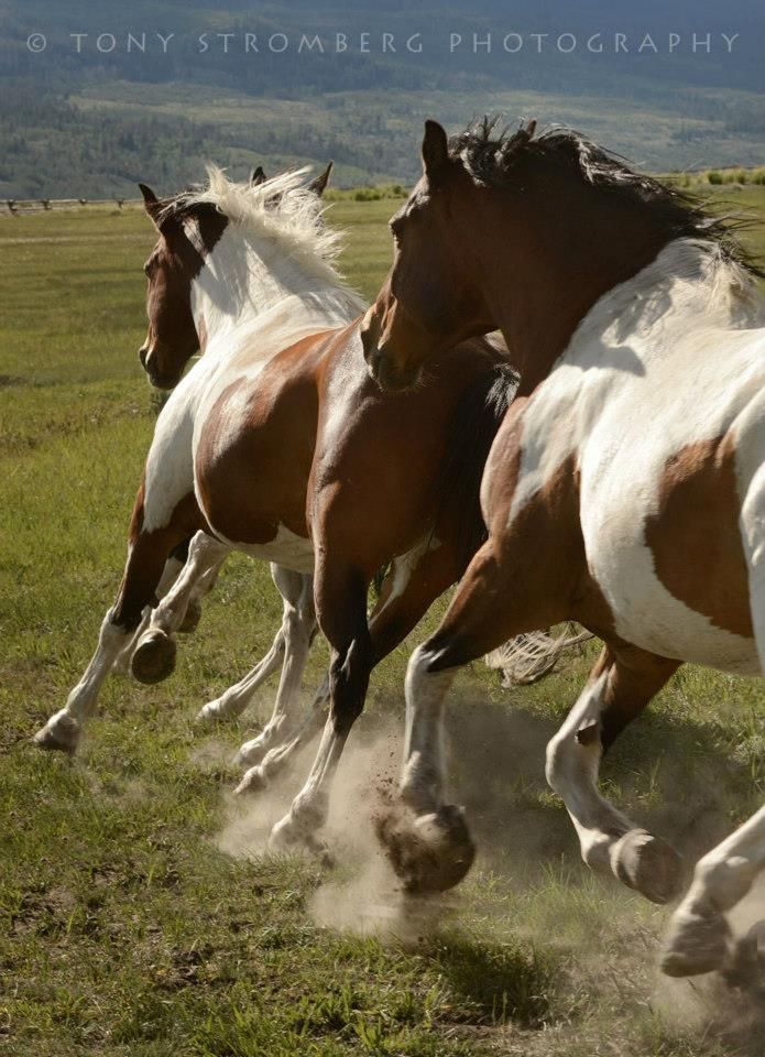 """wild horse buddhist single men Buddhist bowing as contemplation the buddha called the mind """"a monkey, and a wild horse single mean you perform only one bow."""