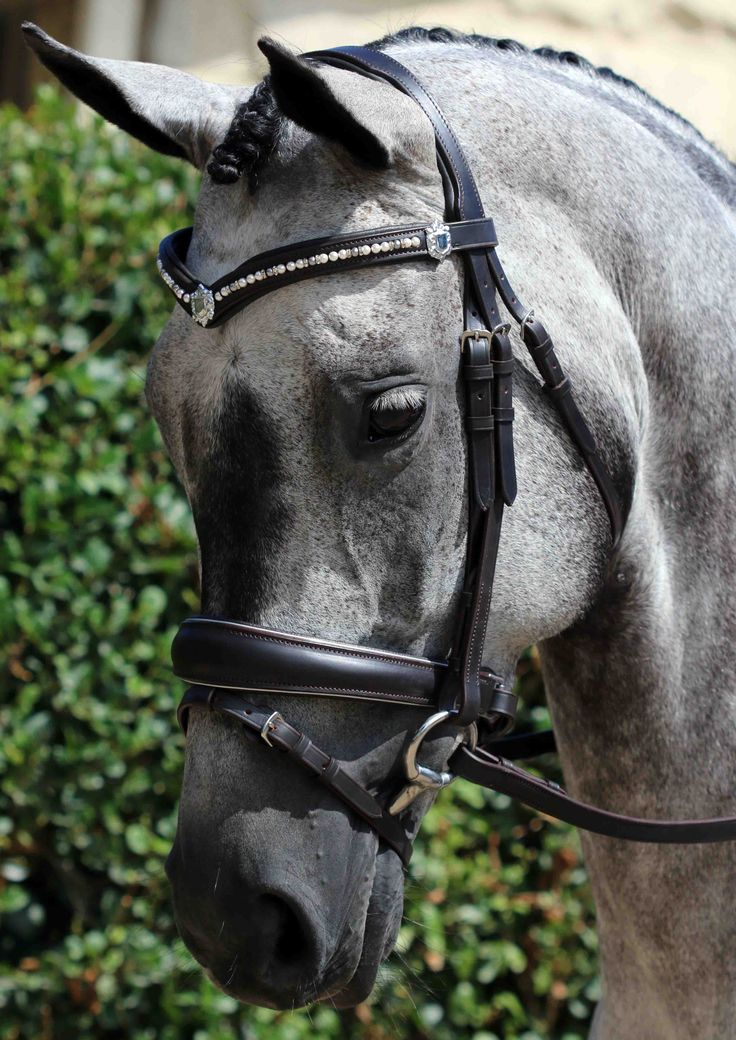 Flexi-Fit Gel English Leather Mix & Match Bridle  in Dark Havana & Stainless Steel with Cream & Grey Swarovski Pearl & Crystal Rondel V Shape with Shields English Leather Browband & Anatomical Converter Crank Raised English Leather Flexi-Fit Gel Padded Noseband