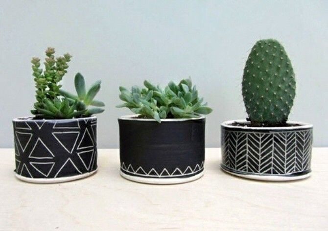 #succulents #cactus #interiors