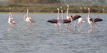 Cabras Pond, sinis peninsula, Oristano gulf, Sardinia Italy.