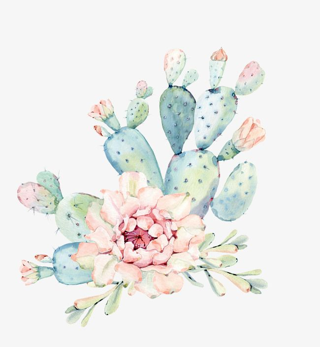 Hand Painted Watercolor Flowers Green Plants Cactus Watercolor