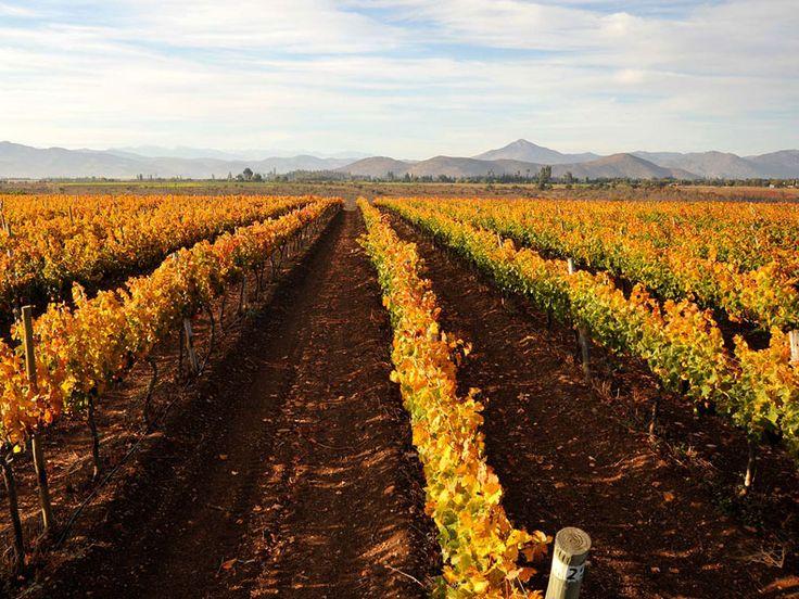 Viña Santa Rita Chile - Valle Limari