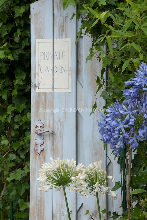 Agapanthus blu, bianco agapanthus, porta del giardino blu dipinto segno dicendo Giardino Privato