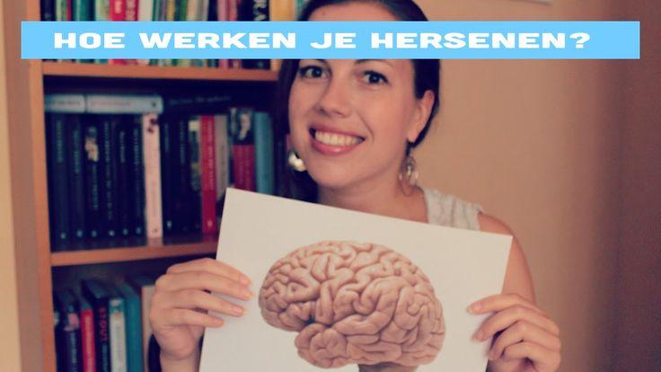'Hoe werkt je brein' voor beginners