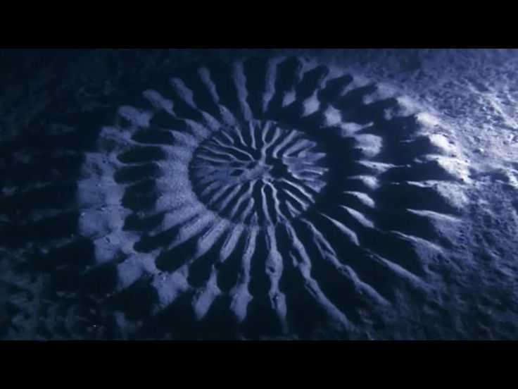 Zeebodemcircels bij Japan. In 1995 ontdekt, in 2013 blijkt dat de kogelvis ze maakt. Zeebiologen legden het op film vast. Liefst een week duurt het om het 1 meter grote nest te maken. De vis zwemt rondjes, peddelt de cirkel in en uit, fladdert met zijn vinnen. Hij versiert de circel met stukjes koraal en schelp. Het vrouwtje, aangetrokken door de vent die speciaal voor haar dagenlang de zeebodem verbouwt, legt haar eitjes midden in de cirkel.