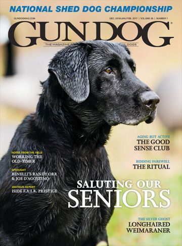 An article from Gun Dog magazine on steps to picking a puppy for your next gun dog