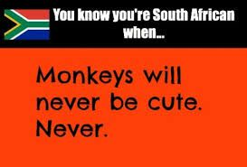 you know you're south african when... HAHAHA  THIS IS SO TRUE