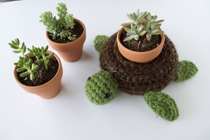 Right now, succulents are IN. I have splurged on myself and gotten a few..  they really add so much life to any room! Why not make it more lively with  your world turtle holder?