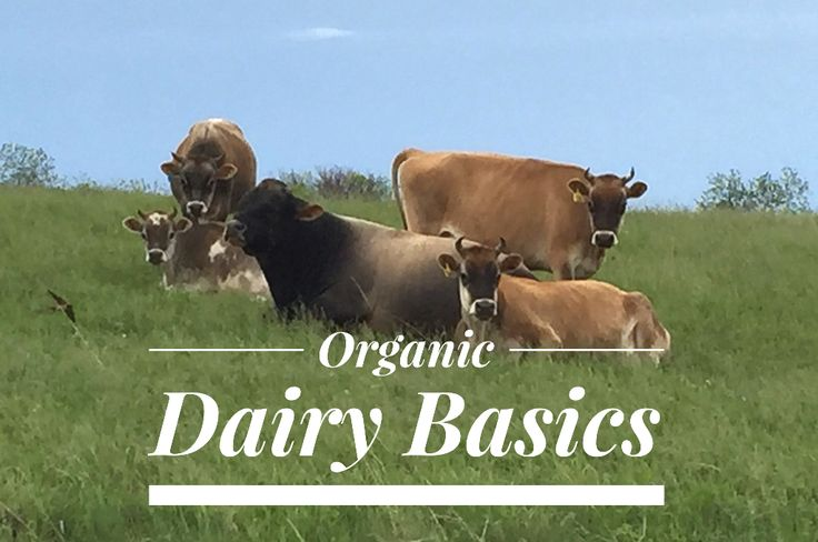 Organic Dairy Basics.  Raising organic dairy animals presents six significant challenges not faced by conventional producers, and they all translate to a higher price for consumers. #NebExt