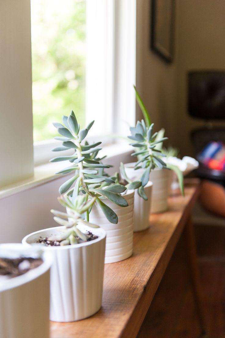 1000+ images about Plant decor on Pinterest