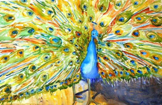 A bright blue peacock shows off its many colors while fanning out its tail. This fine art print is from an original watercolor painting by artist Miriam Schulman and is available for sale online through @imagekind either as a framed fine art print or printed on gallery wrapped canvas.