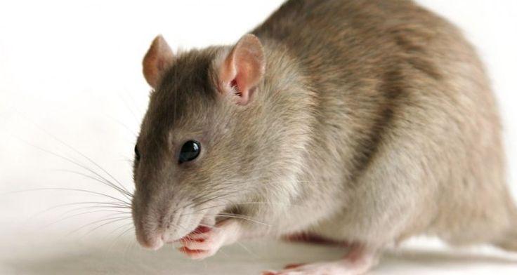 Διωξτε τα ποντικια