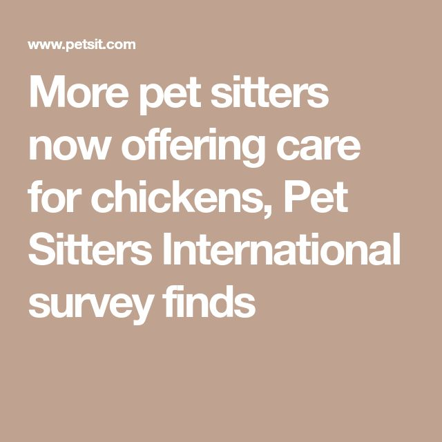 More pet sitters now offering care for chickens, Pet Sitters International survey finds