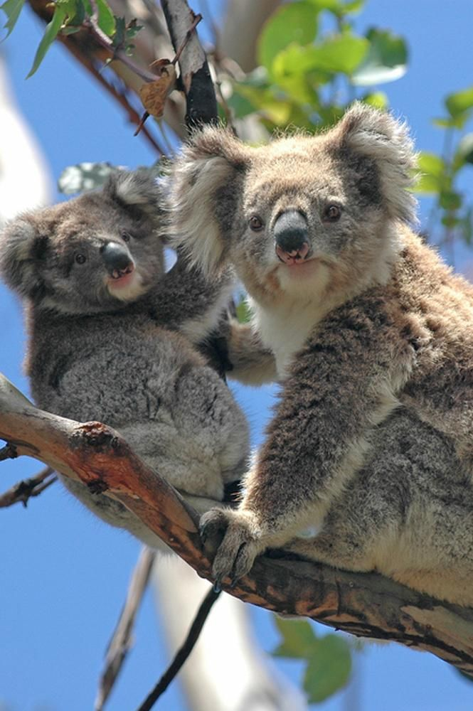 15 Day Discover Australia Vacation Tour | Zicasso