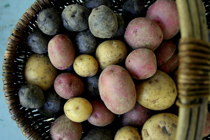 Potatoes come in all shapes, sizes and colors. Get to know some unique potato varieties, from white to pink to purple and blue!