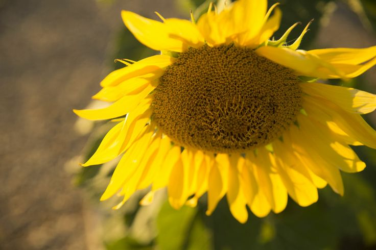 a post about water tanks and sunflowers http://www.13acres.com.au/home/tanks-sunflowers/