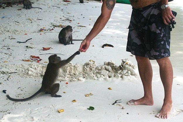Monkey Beach, Phi Phi Island, Phuket