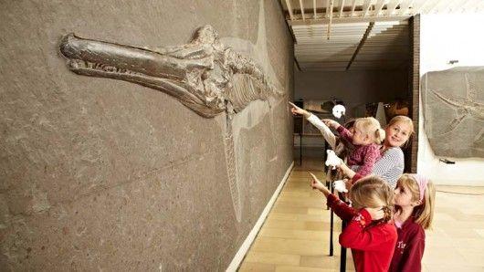 Urweltmuseum/Holzmaden