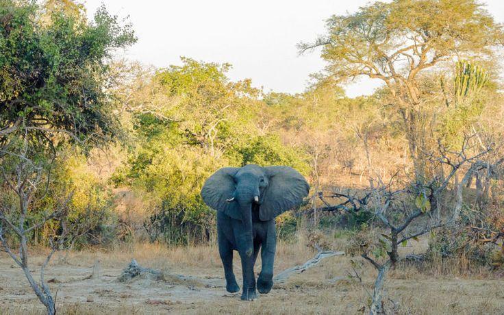 16 besten Nationalpark Safari Bilder auf Pinterest | Safari, Männer ...