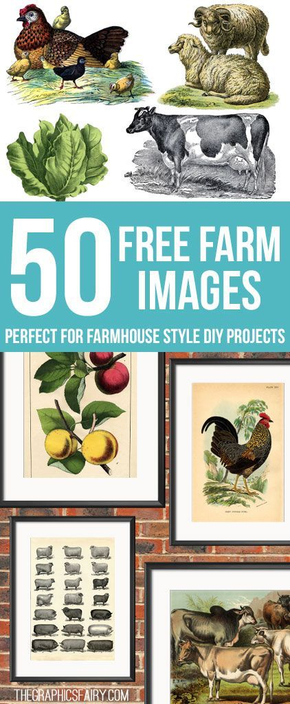 50 Free Farm Images for Farmhouse Style DIY Projects! - So many lovely vintage images and Printables to use in crafts and DIY Home decor! Graphics Fairy.