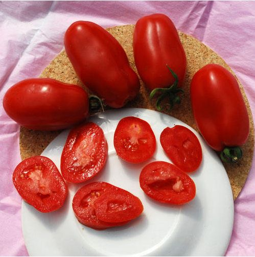 Супер - доступное! 100 семена -  сан - дж. марцано  томатный семена плодов семена овощных культур