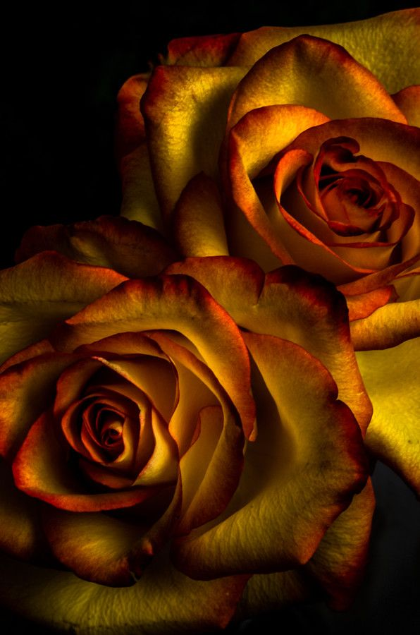 Te regalo una rosa - Página 5 Cbc8efca2884e57e326318a96c624785