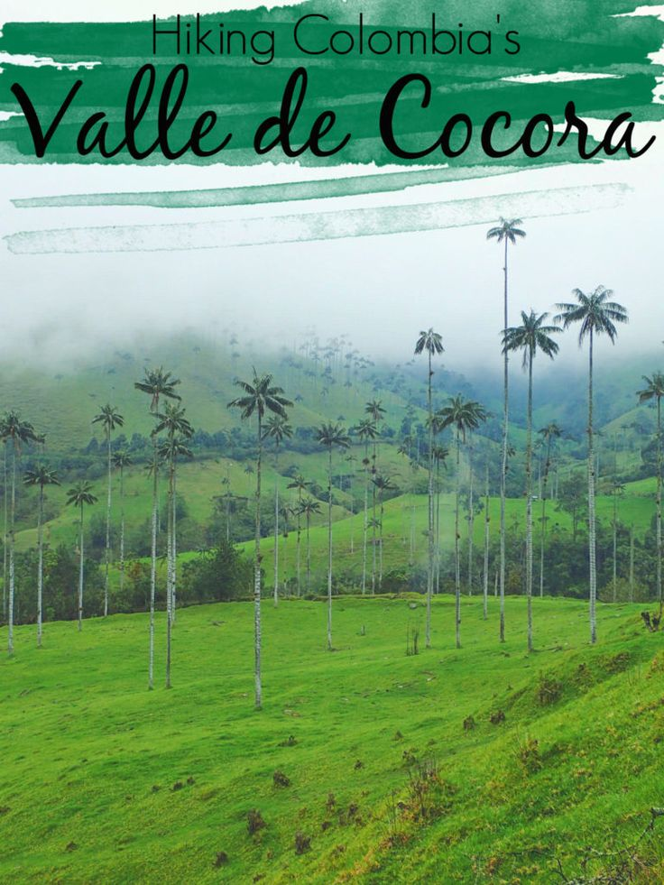 Hiking Colombia's Cocora Valley | The Wandering Blonde