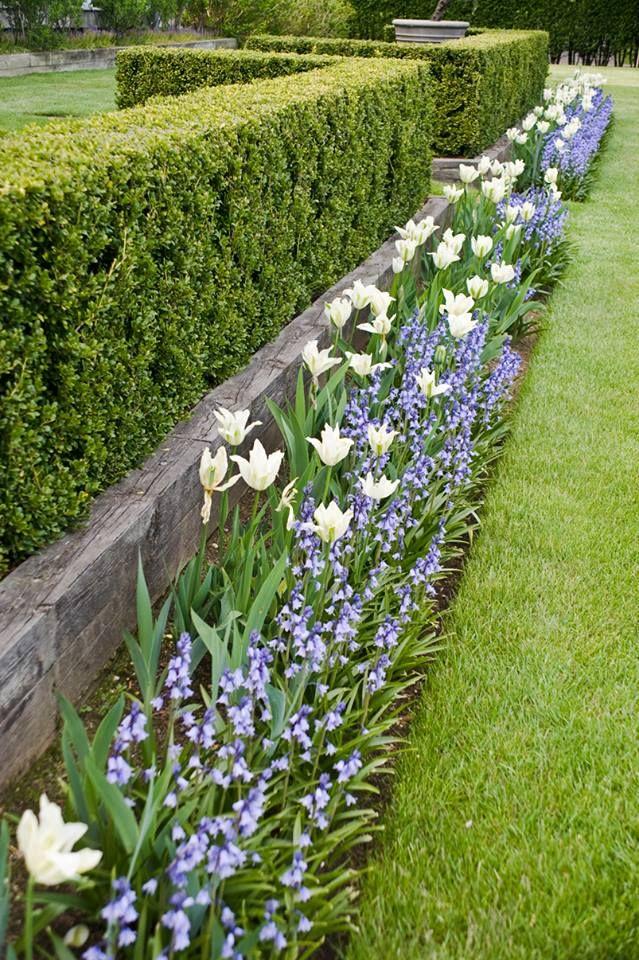 tulips and purple Ina Garten's gardens