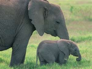 Happy Mothers DayCutest Baby, African Elephant, Mothers Day, Baby Elephants, Children, Elephant Pictures, Rolls Tide, Beautiful Creatures, Animal