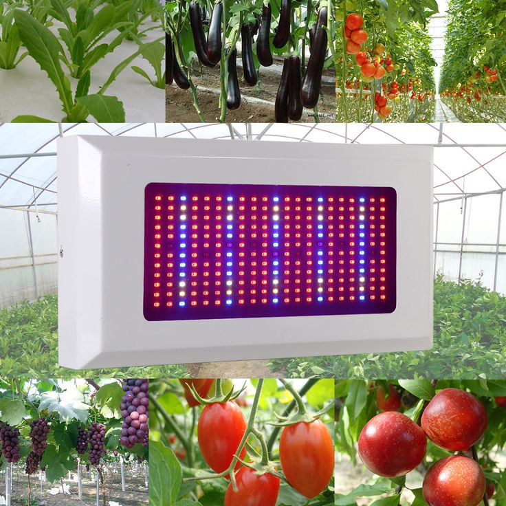 ==> [Free Shipping] Buy Best Full Spectrum 300W LED Grow Light All Brands RedBlueWhiteUVIR AC85265V SMD5730 Led Plant Lamps LED Aquarium Lamps Online with LOWEST Price | 32501262495