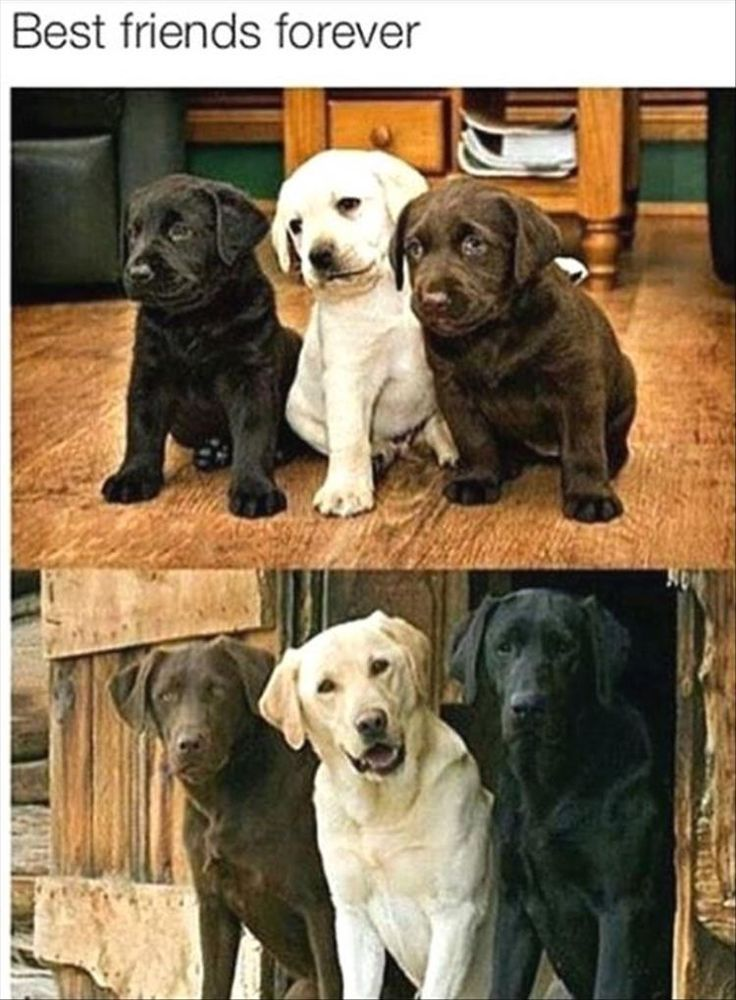 841 Best Cute Dogs Images On Pinterest