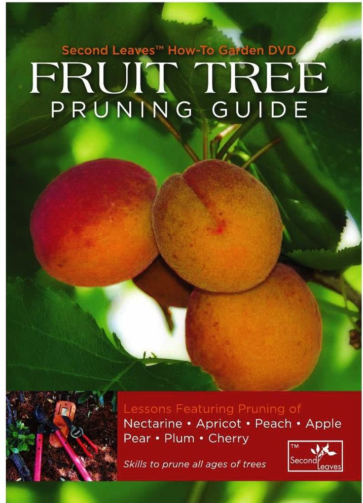 Marvelous When To Prune Fruit Trees How To Prune Pear Trees Pruning Apricot u Cherry