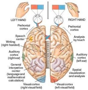 Dyspraxia is a result of conflicting information between the two sides of the brain. (Just think of two people who do not get along - nothing gets done). Both sides are required to integrate the perceptual and motor processes needed to complete complex tasks that often require conscious imaging, planning, position, balance, muscle activation, and co-ordination. (http://occupationaltherapyforchildren.over-blog.com/m/article-87698021.html)