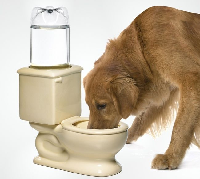 Here's a water dish that is all too familiar to our four-legged friends. It looks just like the toilet that your dog is accustomed to drinking from, only this is a much healthier and more sanitary way for them to get a drink. Just attach a 2-Liter water bottle to the back of the Dog …