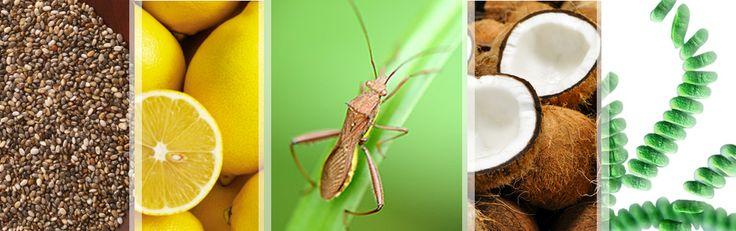 Spiruline, insectes et chia s'intègrent à la composition des barres céréales pour nous permettre de faire le plein de nutriments.