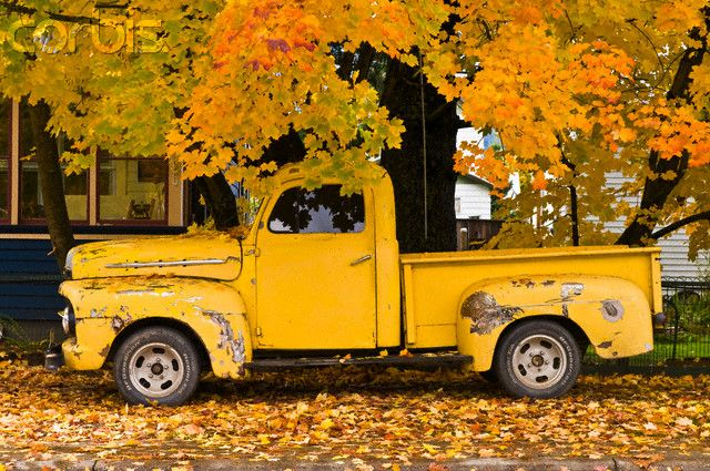 Battered old pickup truck under autumn maple tree - 42-22040896 - Rights Managed - Stock Photo - Corbis