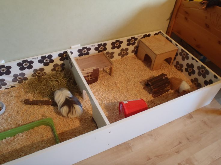 Lovely DIY cage (bookshelf) for Guinea pigs :) | iFokus