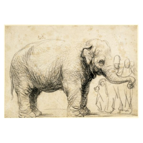 Rembrandt van Rijn, An Elephant, The Netherlands 1637, Clearly made from life, it stands on its own as an independent work of art -  British Museum