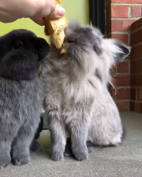 Best treats for your rabbit…