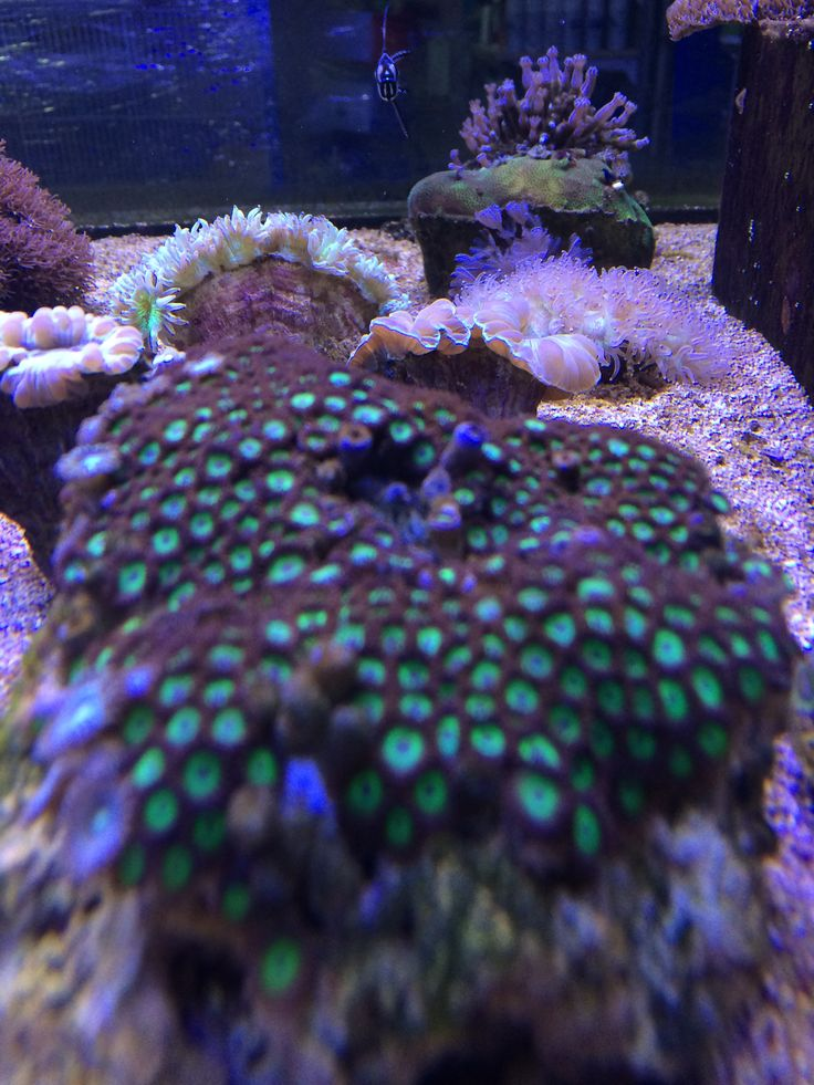 Our reef tank