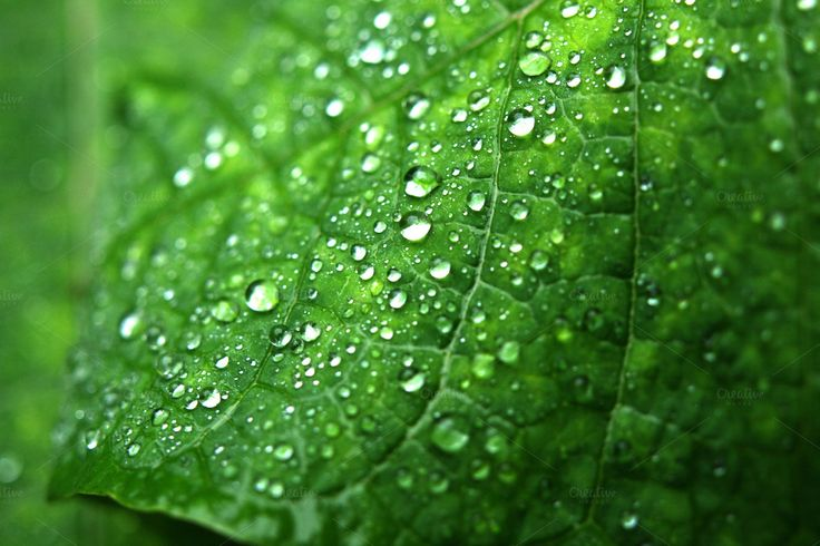 Green leaf with drops of water by ptystockphoto on @creativemarket