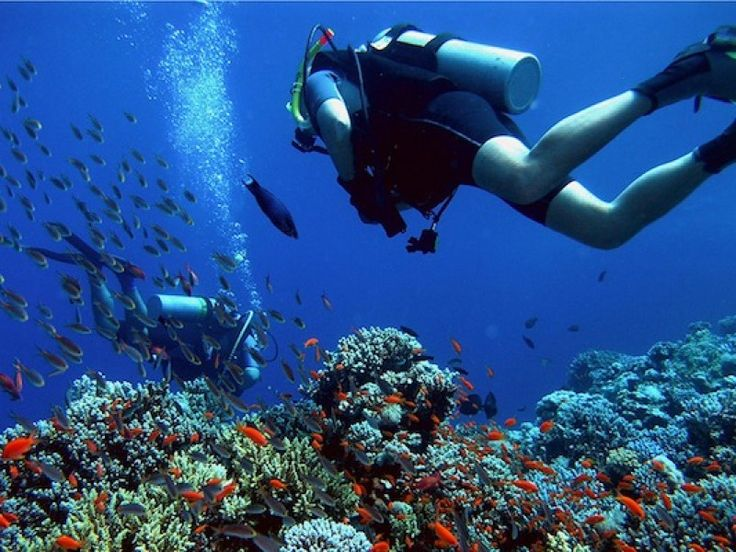 BALI DIVING TOUR AT MENJANGAN ISLAND - MyTripIndonesia