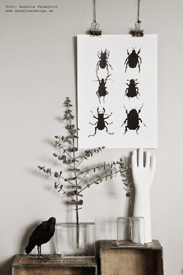 konsttryck, skalbaggar, skalbagge, svartvita posters, poster med bugs, tavlor, tavla, anneliesdesign, annelies design & interior, svart och vitt, svartvit, svartvita, svart, vitt, vit, vita, clips till att sätta upp prints, clips, klämmor för konsttrycken, webbutik, webbutiker med tavlor, webshop,