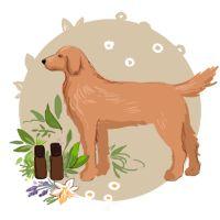Dossier thématique - Soigner son animal naturellement - Aroma-Zone