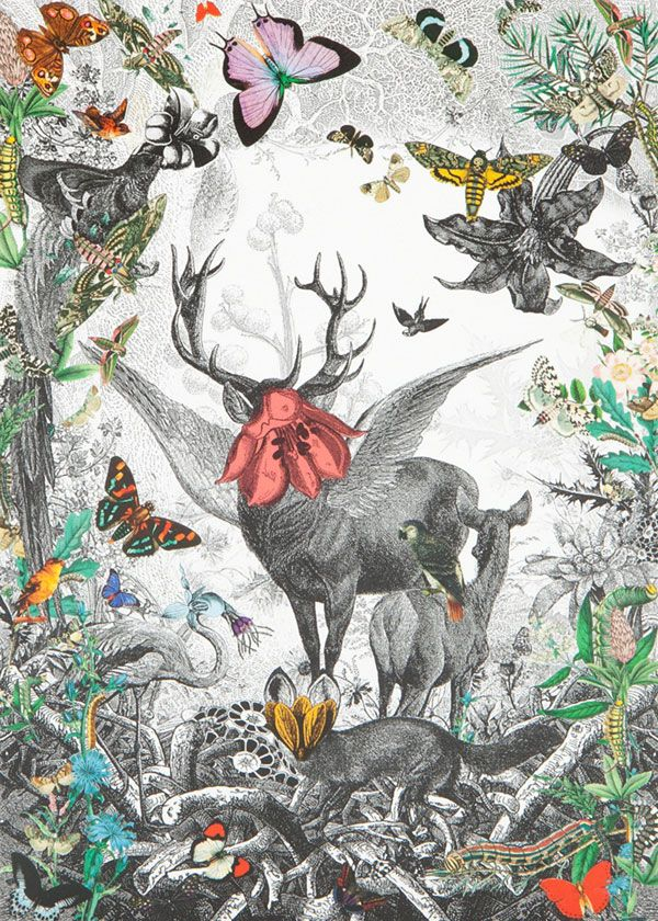 Cosmic Victorian Safari – Kristiana S. Williams